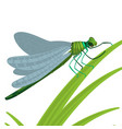 dragonfly insect with big eyes and strong vector image
