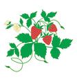 blossom strawberry vector image