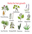natural hair care herbs for growth vector image