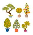 money tree set decorative plants in flower pots vector image