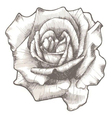 hand drawn rose vector image vector image