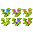 Flower in six colors vector image vector image