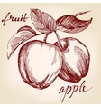 apples on apple tree branch fruit hand drawn vector image