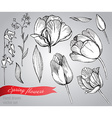 Set of hand-drawn spring flowers tulips vector image