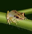 Coqui frog 2 vector image vector image