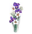 Painted bouquet of narcissuses and irises flowers vector image