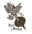fresh vegetables logo design template ripe vector image