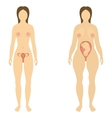 The woman before and during pregnancy vector image