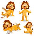 Cartoon lions vector image