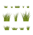 Green grass bushes plant isolated vector image