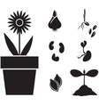 flower and seed vector image vector image