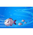 Four piranhas under the sea vector image vector image
