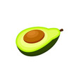 half of avocado fruit cartoon vector image