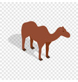 camel isometric icon vector image