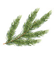 fir branch isolated on white background christmas vector image