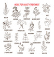collection of herbs for anxiety treatment vector image