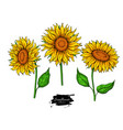 Sunflower flower drawing set hand drawn vector image
