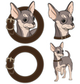 Color with Chihuahua in a collar vector image