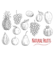 Natural fruits sketches for vegetarian food design vector image