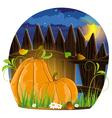 Autumn pumpkins vector image