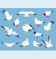 cartoon atlantic seabird vector image