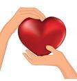 heart inside hands vector image