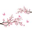 sacura branches vector image