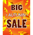 Advertisement about the autumn sale vector image