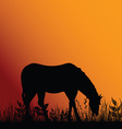 horse eat in nature vector image