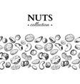 nuts vintage  hand drawn vector image