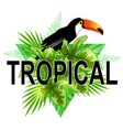 green triangle with toucan vector image vector image