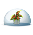 A dome with a plant inside a gray pot vector image vector image