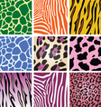 colorful animal skin textures vector image vector image
