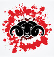 angry black sheep face  head with big horn vector image