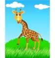 giraffe in the wild vector image