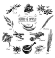 hand drawn set with Herbs Spices vector image