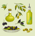 glass bottles of olive oil branches with green vector image