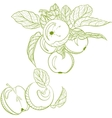 Monochrome drawing apples and apple branch vector image
