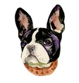 French Bulldog muzzle watercolor vector image