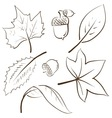 doodle autumn fall leaves acorn vector image