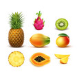 set of tropical fruits vector image