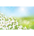 spring nature blossom tree vector image vector image