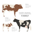 cattle farming infographic template cow bull calf vector image