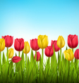 Green grass lawn with tulips on sky Floral nature vector image