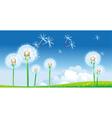 spring landscape with dandelions vector image