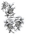 Floral pattern rose black and white vector image