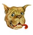 Bulldog muzzle Hand drawn watercolor vector image