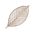 nut leaf isolated on white background vector image vector image