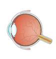 eyeball Stock vector image