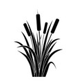 silhouette black water reed plant cattails leaf vector image